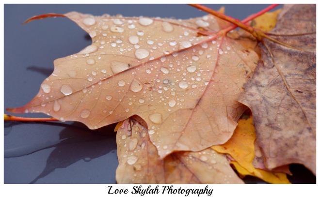 Raindrops on Leaves.jpg