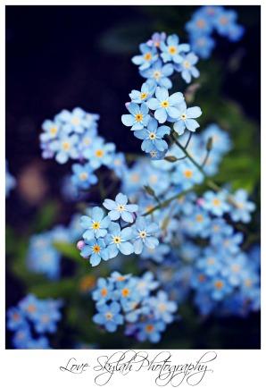 Flowers- 150 likes