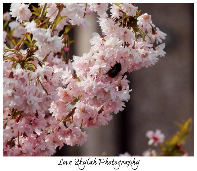 Blossoming Bee