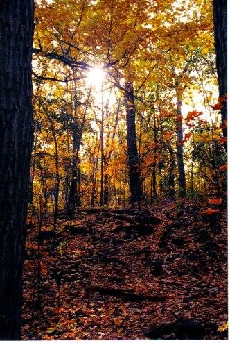 Sparkle Through The Trees.jpg