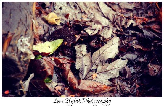 Dead Leaves.jpg